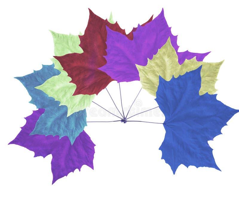 Kolorowy jesień liść klonowy odizolowywający na białym tle royalty ilustracja