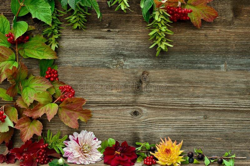 Kolorowy jesień liści drewna tło obraz royalty free
