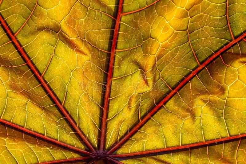 Kolorowy jesienny liścia zakończenia tło fotografia stock