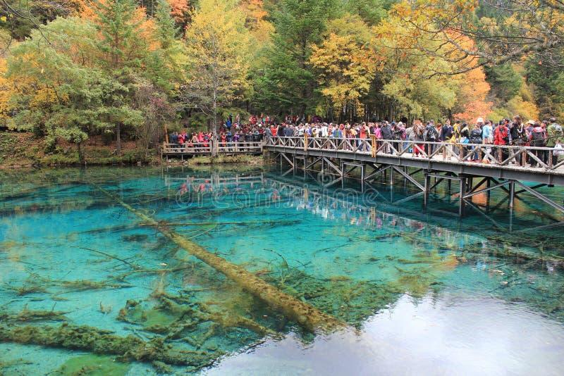 Kolorowy jezioro w Jiuzhaigou fotografia royalty free