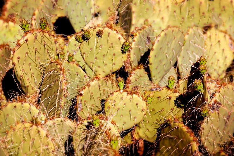 Kolorowy kaktus w pustyni zdjęcia stock