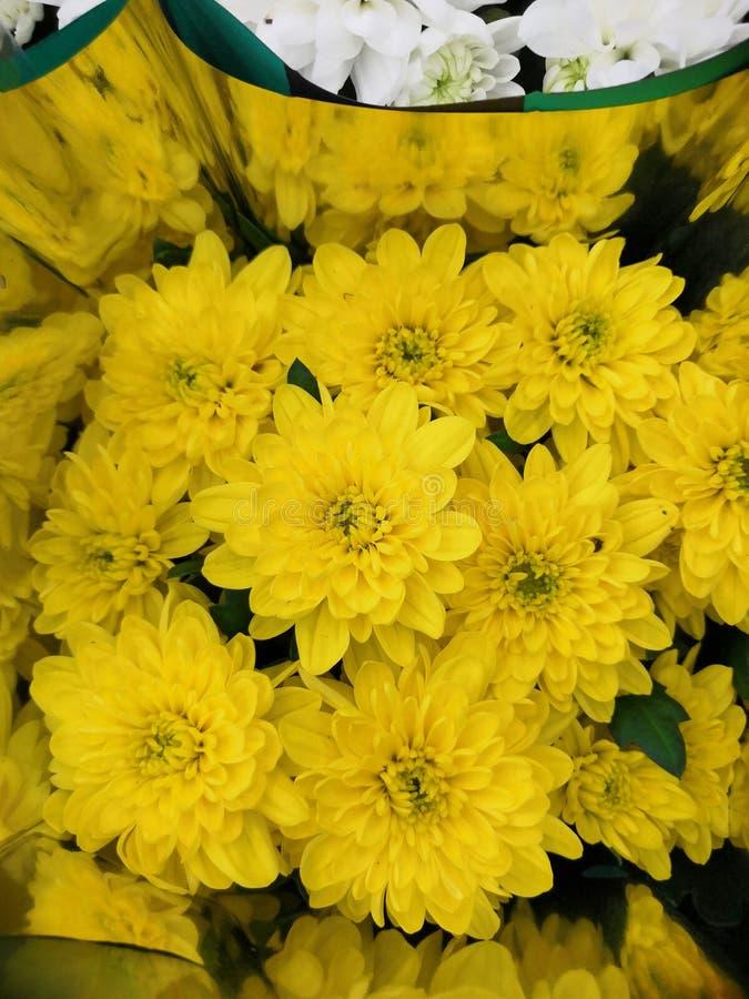 Kolorowy koloru żółtego i pomarańcze chryzantemy kwiatu kwiat zdjęcia royalty free