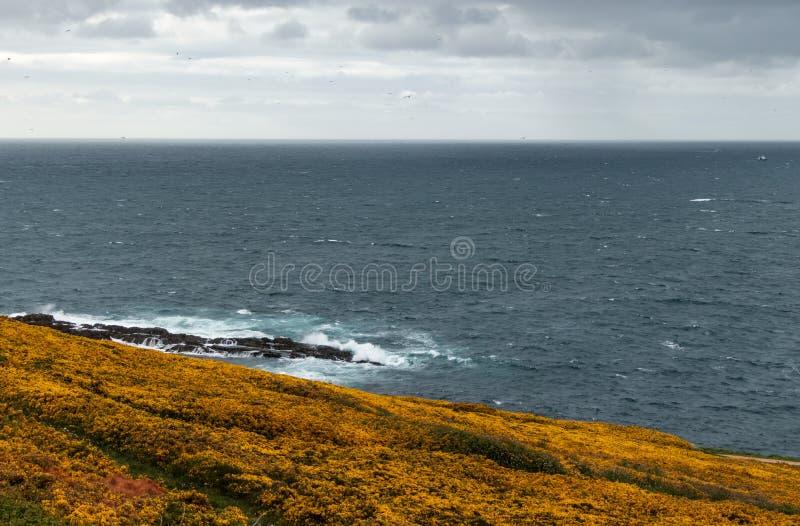 Kolorowy krajobraz Atlantycki wybrzeże z dennym łamaniem przeciw falom i żółta miotła w kwiacie w Coruña, Galicia, zdjęcia stock