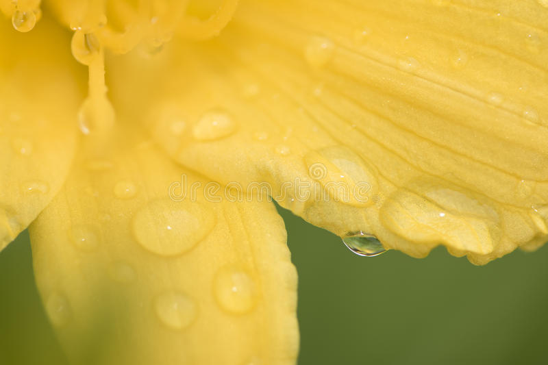 kolorowy kwiat żółty zdjęcia stock