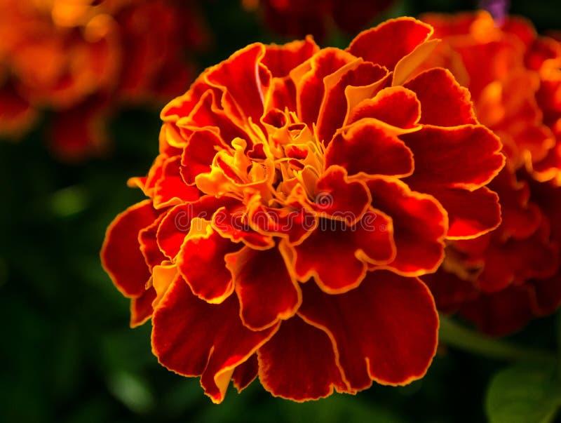 kolorowy kwiat zdjęcie stock