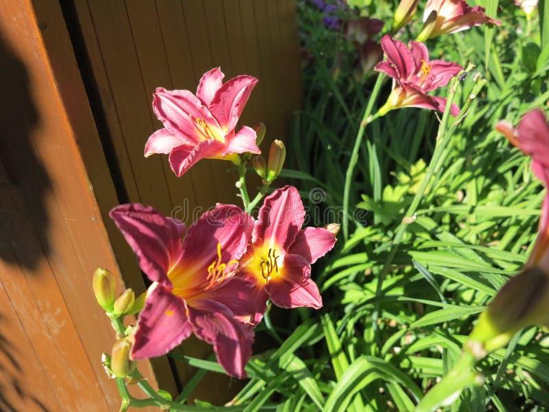 kolorowy kwiat fotografia stock