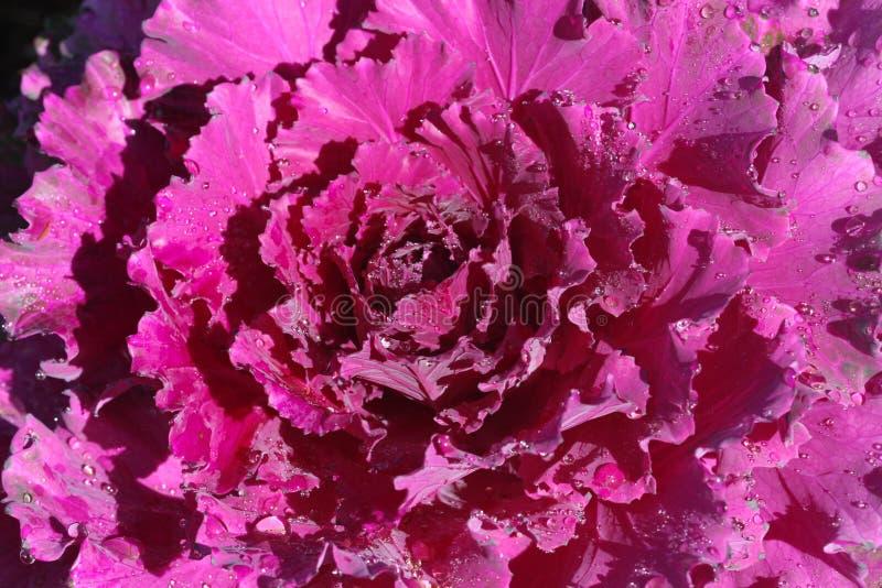 kolorowy kwiat w północy Tajlandia obraz stock