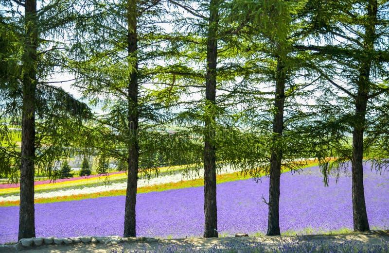 Kolorowy kwiatu pole za drzewami obrazy royalty free