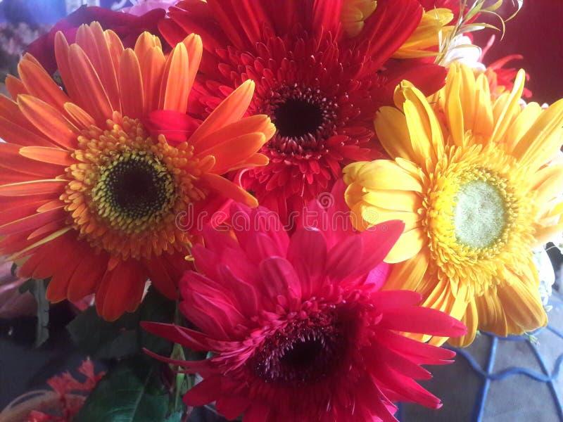 Kolorowy kwiatu zbliżenie obrazy royalty free