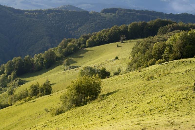 Kolorowy lato krajobraz fotografia stock
