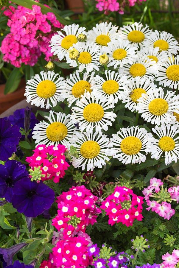 Kolorowy lato kwitnie w ogródzie, pionowo format obraz royalty free