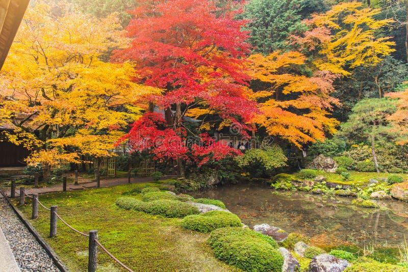 Kolorowy liść klonowy w Japonia lesie z wodnym stawem fotografia stock