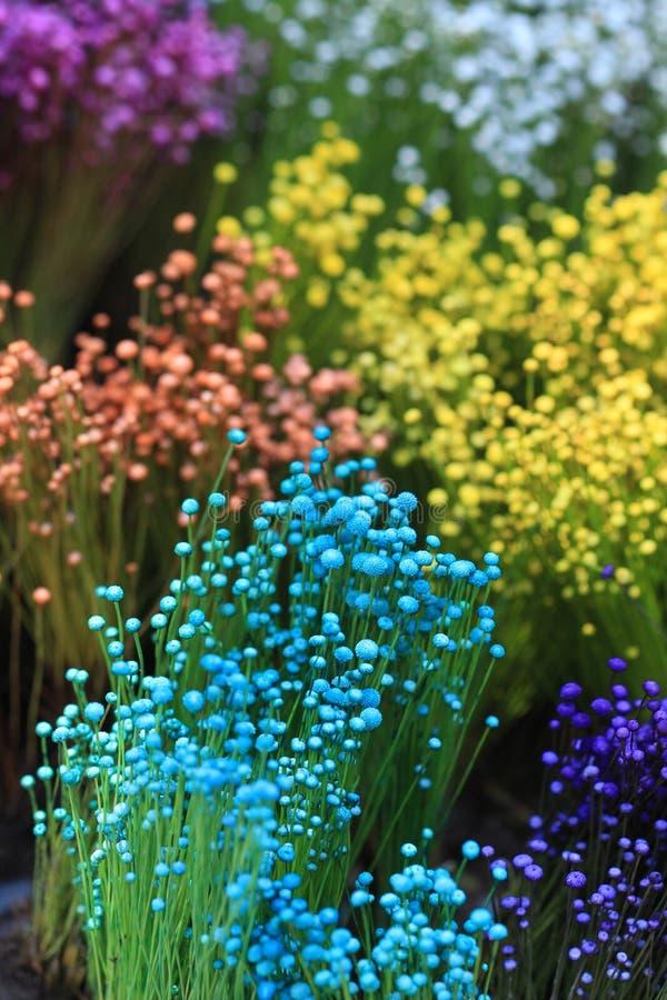 Kolorowy mały trawa kwiat obrazy stock