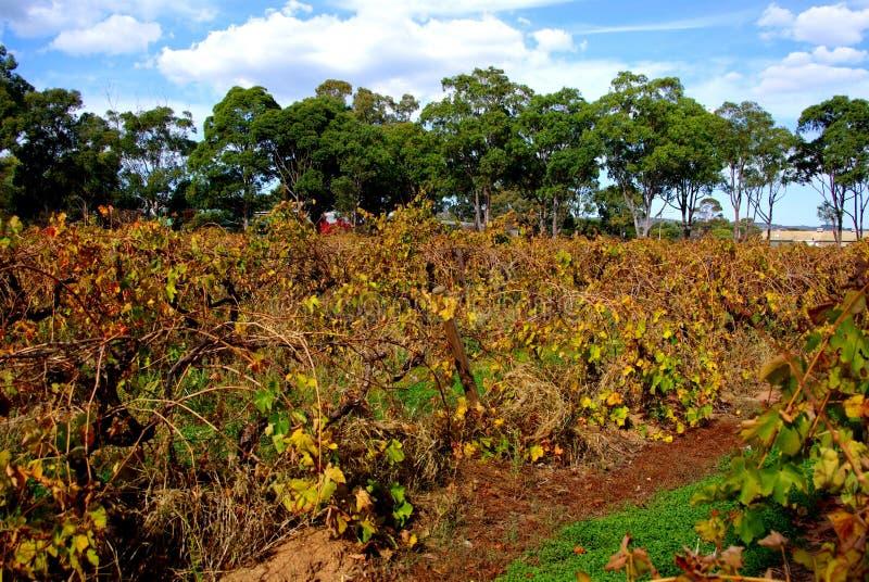 kolorowy mclaren dolina winogrady zdjęcia stock
