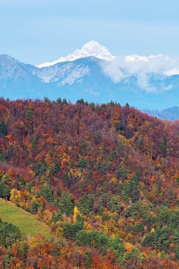 Kolorowy mieszany lasowy zbocze i powstające góry w tle obraz royalty free