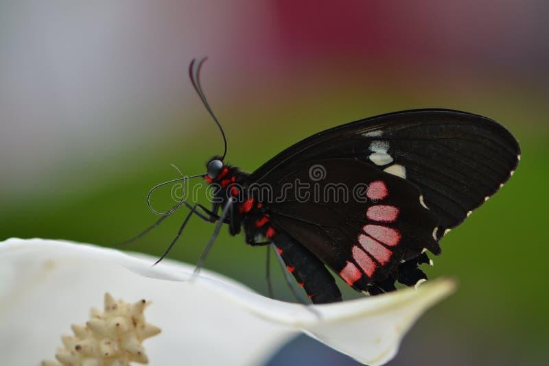 Kolorowy motyl fotografia royalty free