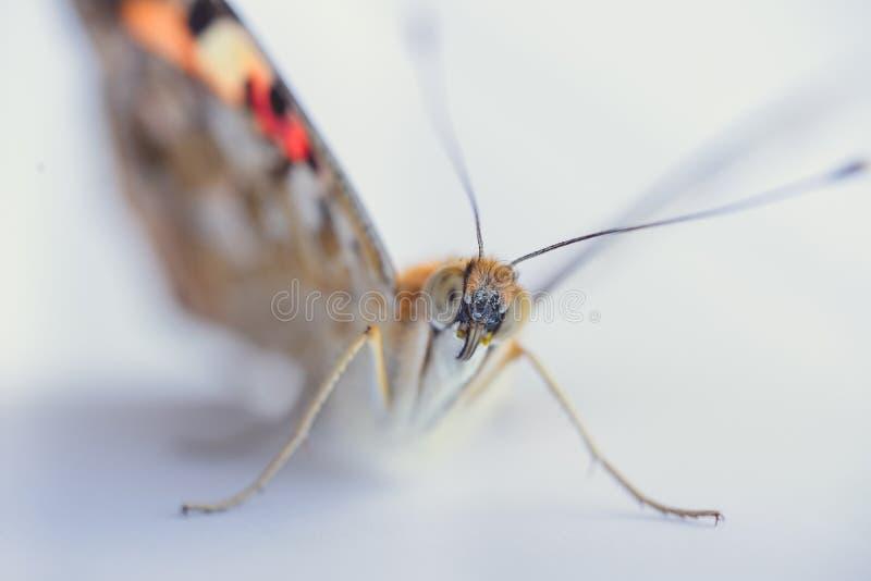 Kolorowy motyl na bia?ym tle Kopii przestrzenie zdjęcie royalty free