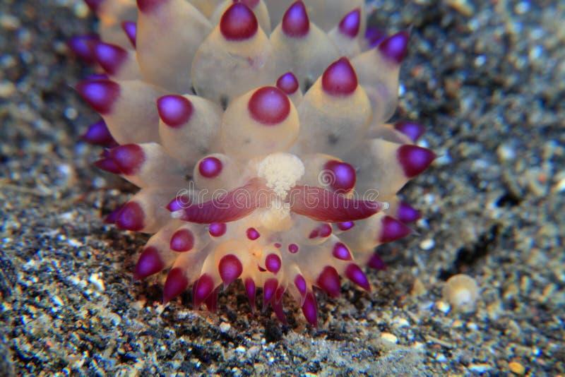 Kolorowy nudibranch zdjęcie stock