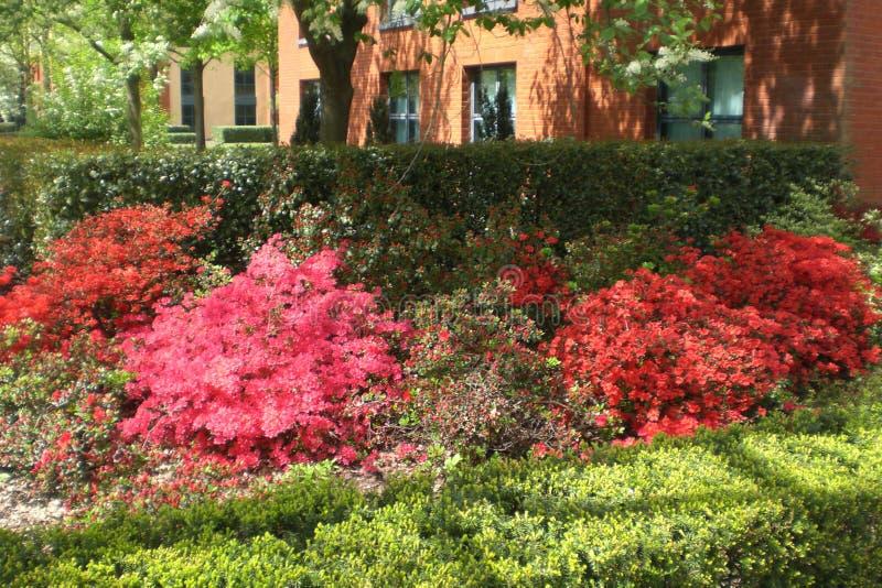 Kolorowy ogród w Francja obrazy royalty free