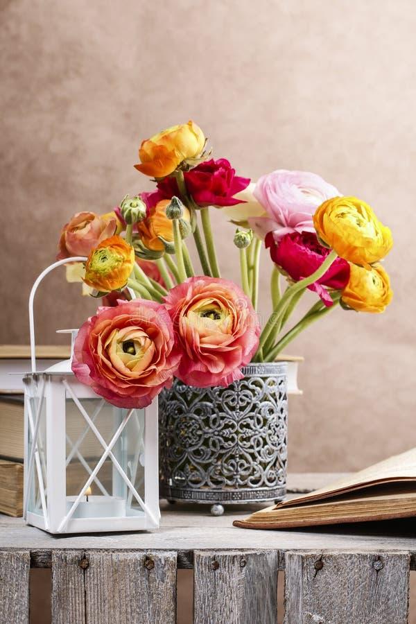 Kolorowy perski jaskier kwitnie (ranunculus) fotografia royalty free