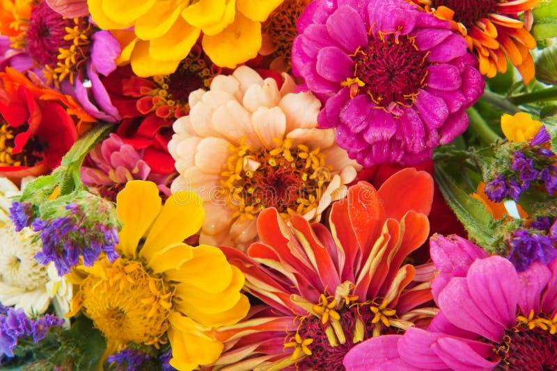 kolorowy przygotowania kwiat fotografia stock