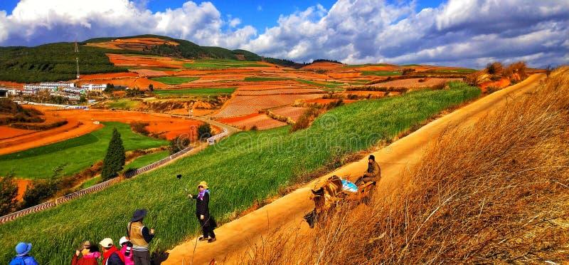 Kolorowy ryż tarasuje w Yunnan prowincji, Chiny obraz royalty free