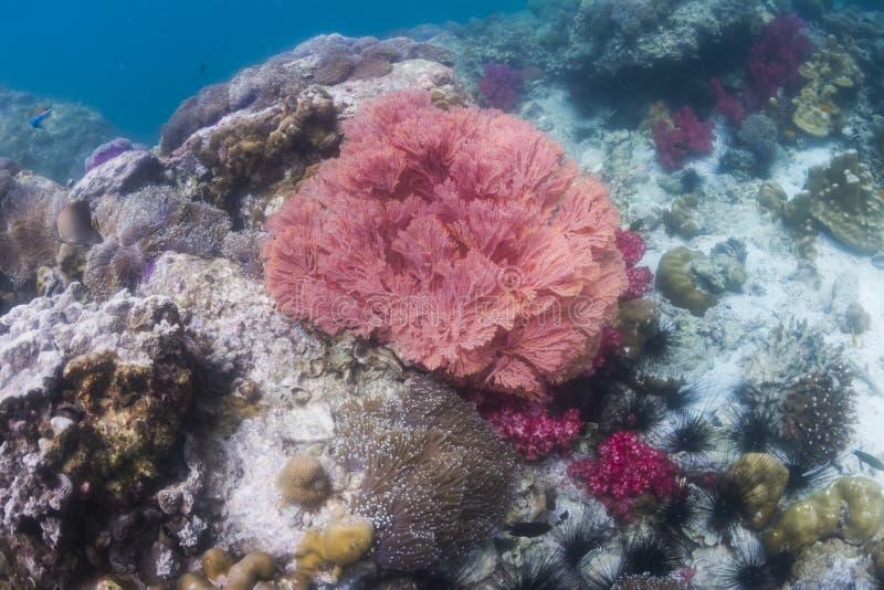 Kolorowy seafan przy Lipe wyspą obrazy royalty free