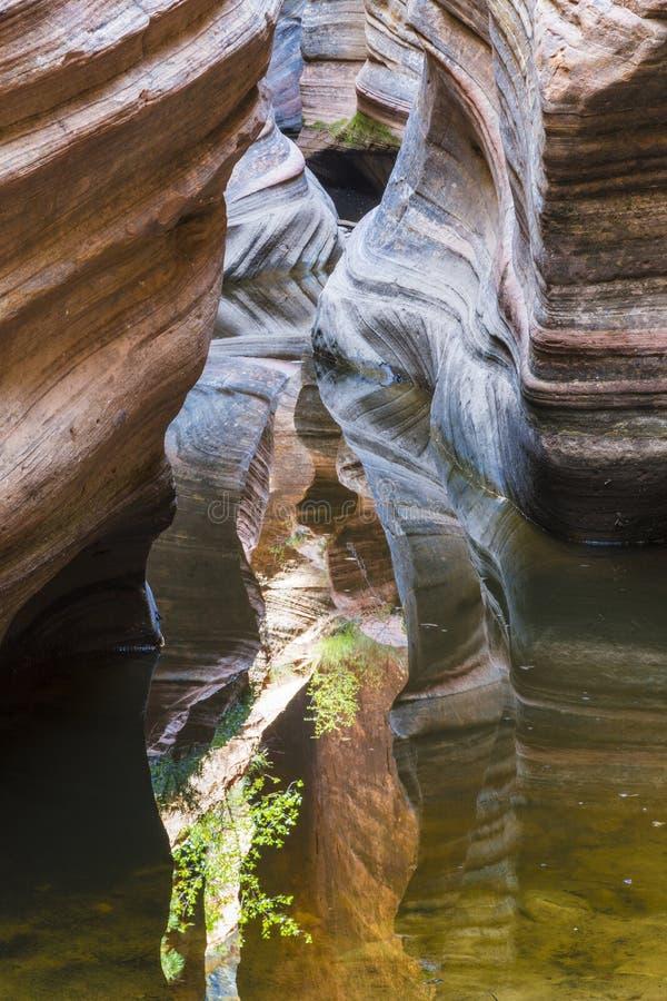 Kolorowy szczelina jar w Zion parku narodowym obraz stock