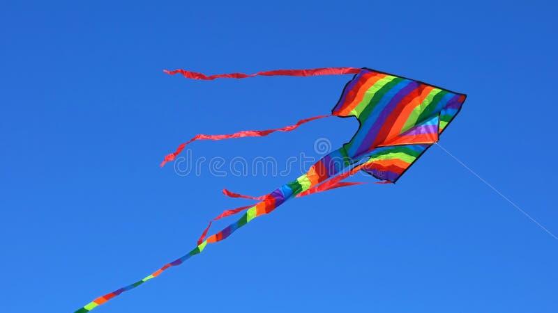 Kolorowy tęczy kani latanie fotografia royalty free