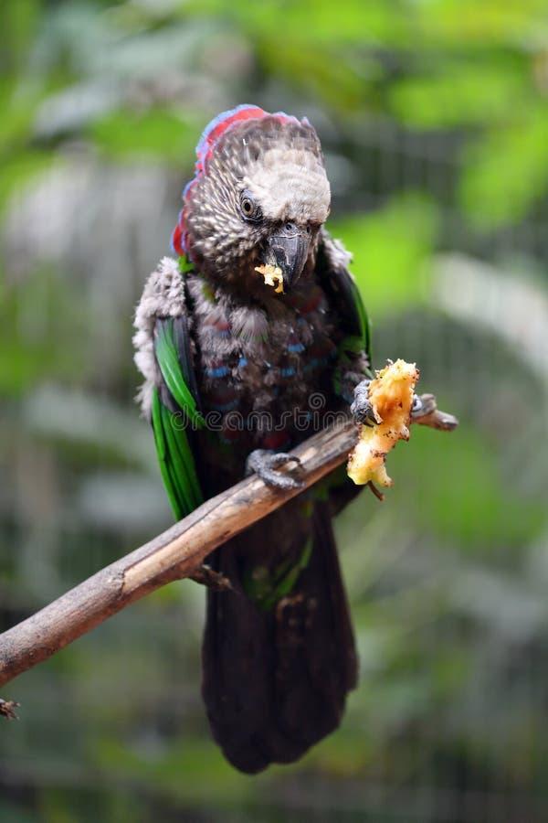 Kolorowy tropikalny ptak w lesie obraz royalty free