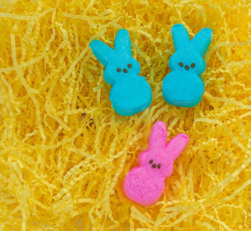 Kolorowy Wielkanocny marshmallow podpatruje na żółtej Wielkanocnej trawie zdjęcie royalty free