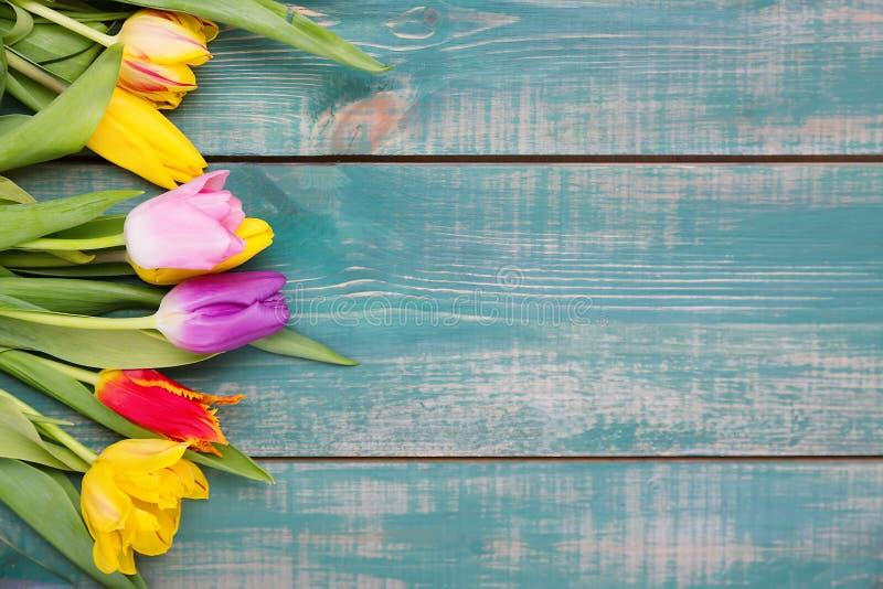 Kolorowy wiosna tulipan kwitnie na zielonym drewnianym tle jako kartka z pozdrowieniami z bezpłatną przestrzenią fotografia royalty free