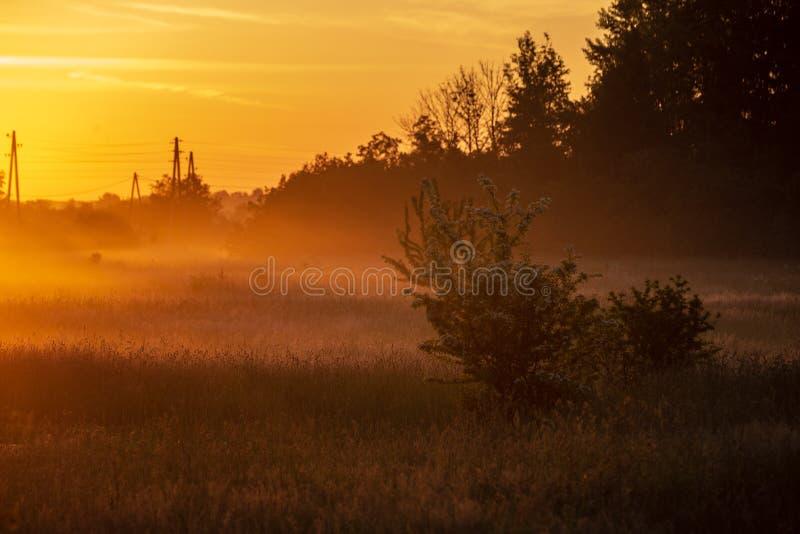 kolorowy wschód słońca zmierzch w mglistej lato łące zdjęcia stock
