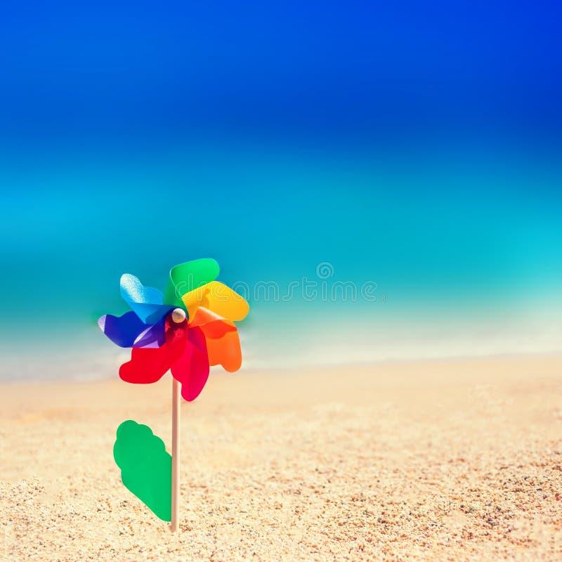 Kolorowy zabawkarski kwiat jako homoseksualny symbol i rozmyty morze wyrzucać na brzeg backgro zdjęcia stock