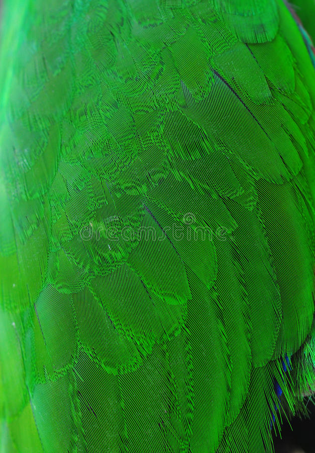 kolorowy zieleni papugi upierzenia skrzydło obrazy stock