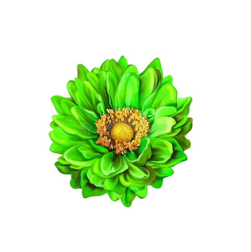 Kolorowy Zielony Mona Lisa kwiat, wiosna kwiat ilustracja wektor