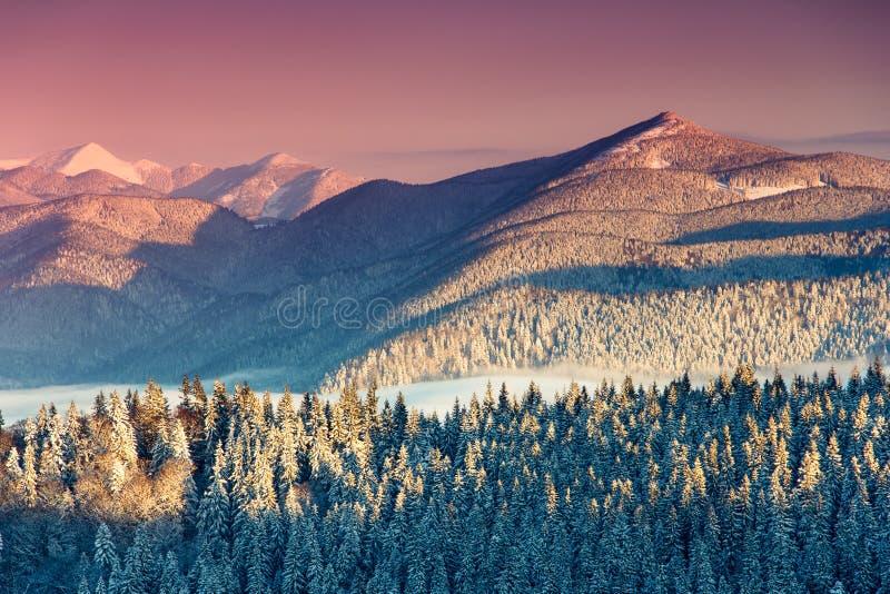 Kolorowy zima ranek w górach fotografia royalty free