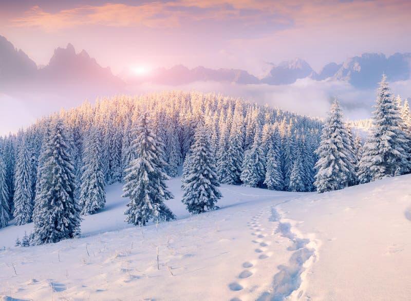 Kolorowy zima ranek w mgłowych górach zdjęcia stock