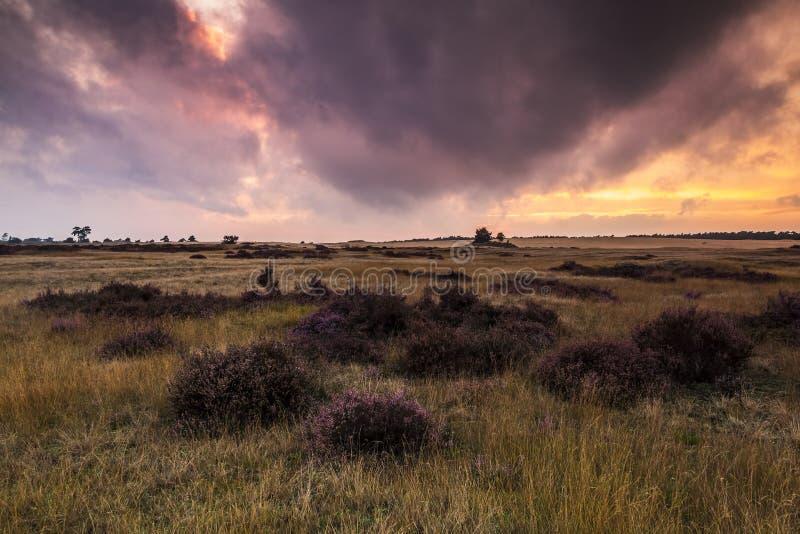 Kolorowy zmierzch przy moorland krajobrazem obraz royalty free