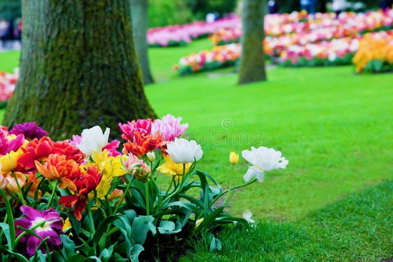 kolorowych kwiatów parkowa wiosna obrazy stock