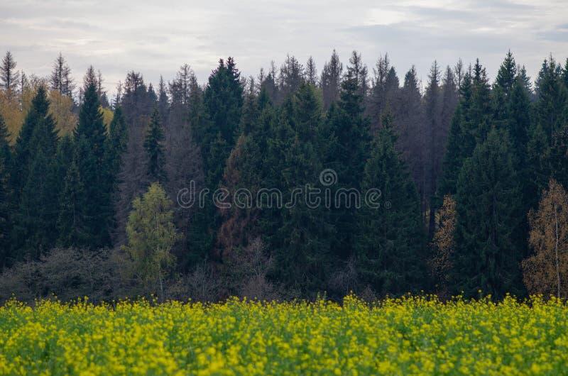 Koloru żółtego pole i las, chmury w jesieni zdjęcia royalty free