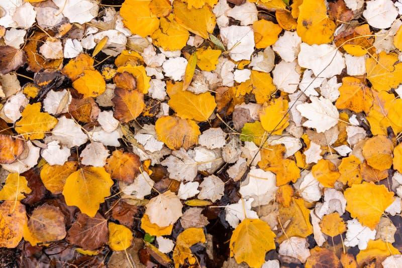 Koloru żółtego, brązu i pomarańcze liści tekstura, Jesień krajobraz obraz stock