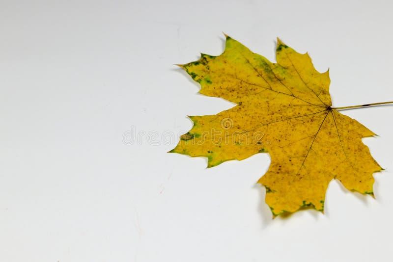 Koloru żółtego i zieleni liść zdjęcia stock