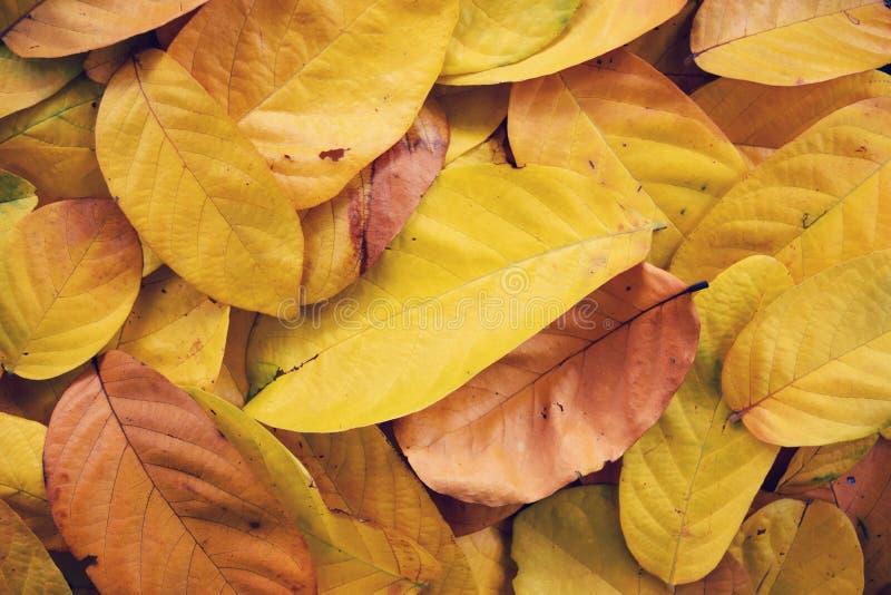 Koloru żółtego liścia suchej warstwy jesieni abstrakcjonistyczny tło obraz stock