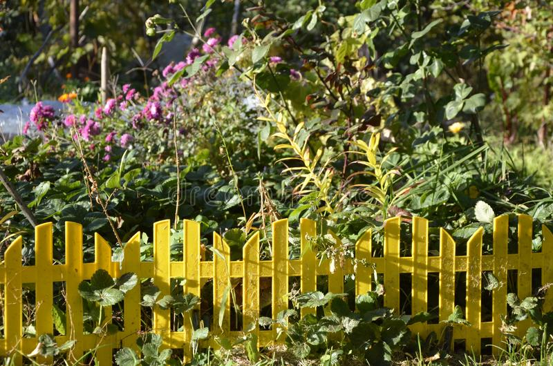 Koloru żółtego ogrodzenie dla frontowego ogródu ogradza gazon zdjęcie royalty free