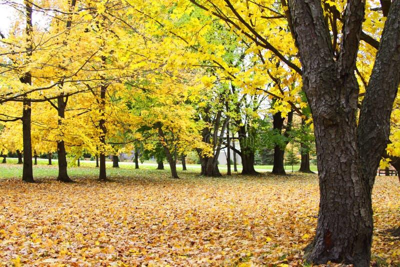 Koloru żółtego park obraz royalty free