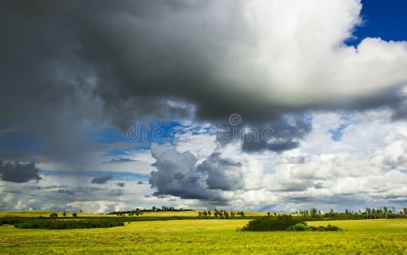 Koloru żółtego pole pod pięknym niebem na sposobie od Karaganda Astana, Kazachstan zdjęcia stock