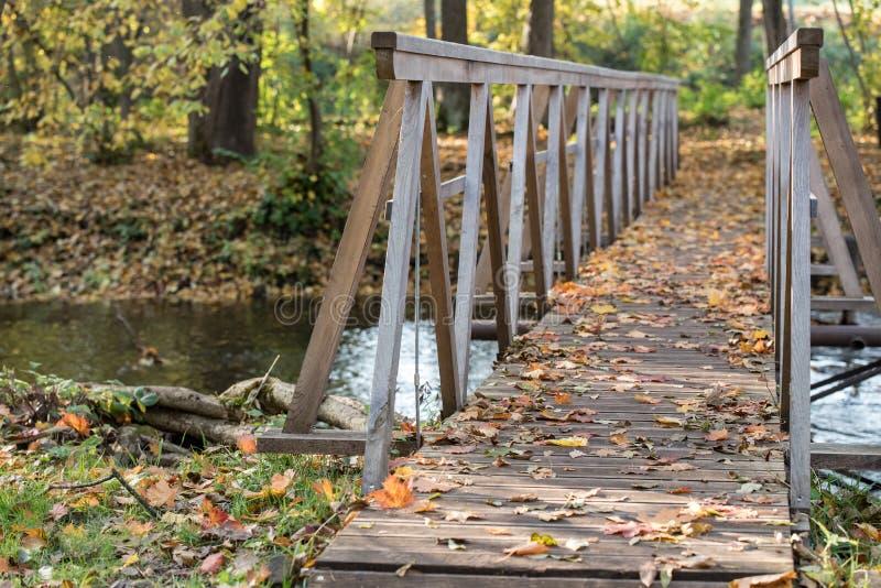 Koloru żółtego, pomarańcze i czerwieni jesieni liście w pięknym spadku parku, Iecava Latvia obraz royalty free
