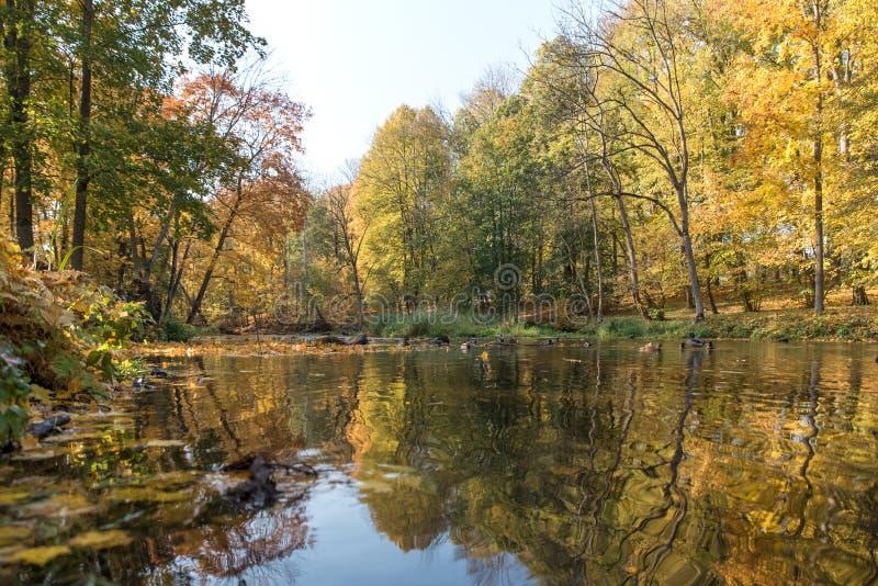 Koloru żółtego, pomarańcze i czerwieni jesieni liście w pięknym spadku parku, Iecava Latvia obrazy royalty free