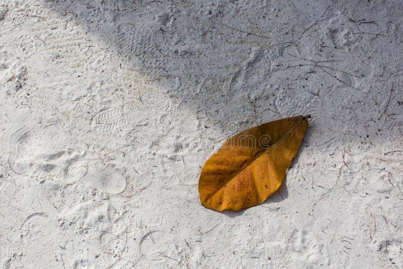 Koloru żółtego wysuszony liść na plaży zdjęcie royalty free